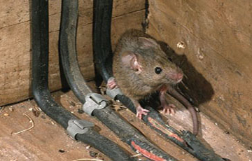 Mouse Proofing - getting rid of mouse rochester NY