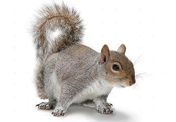 rodent removal rochester NY