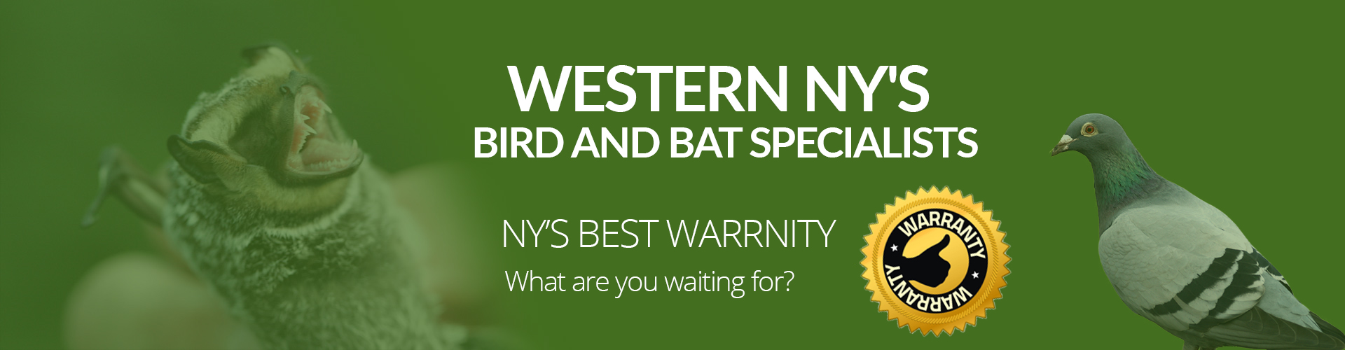Western New York's Bird and Bat Specialists