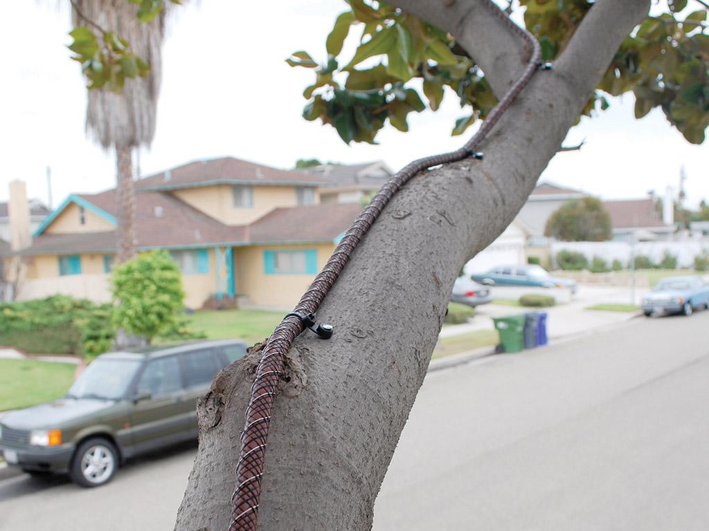 Tree Shock