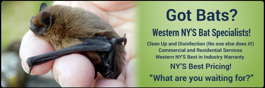 Western NY's Bat specialists!